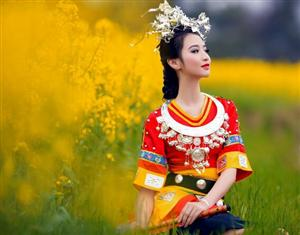 【花之南】昆明赏樱九乡罗平油菜花弥勒温泉双飞6日